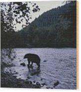A Black Bear Searches For Sockeye Wood Print
