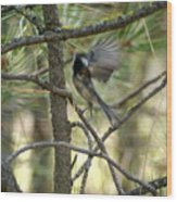 A Black Capped Chickadee Taking Off Wood Print