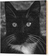 A Black Cat's Life -florida Wood Print