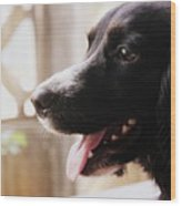 A Black Dog Wood Print