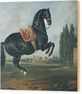 A Black Horse Performing The Courbette Wood Print