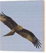 A Black Kite Wood Print