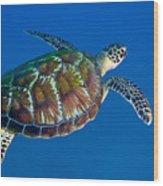 A Black Sea Turtle Off The Coast Wood Print by Michael Wood