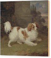 A Blenheim Spaniel Wood Print by William Webb