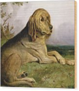 A Bloodhound In A Landscape Wood Print