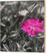 A Bloom Of Color Wood Print