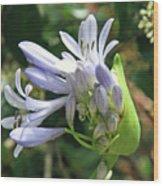 A Blooming Bud Wood Print