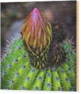 A Blooming Cactus Wood Print