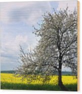 A Blooming Tree In A Rapeseed Field Wood Print