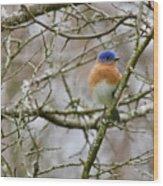 A Bluebird  Wood Print