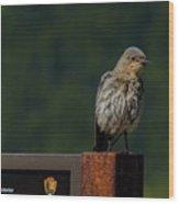 A Bluebird Welcome Wood Print