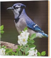 A Bluejay Bouquet Wood Print
