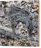 A Bob Cat Wood Print