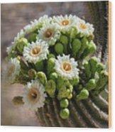 A Bouquet Of Saguaro Blossoms Wood Print