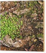 A Bowl Of Greens Wood Print
