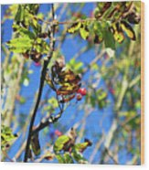 A Branch Standing Out From The Crowd Wood Print