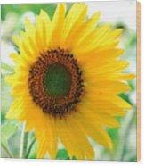 A Bright Yellow Sunflower Wood Print