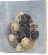 A Bucket Of Chicks Wood Print
