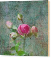 A Bud - A Rose Wood Print