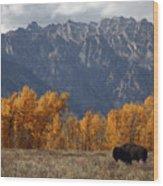 A Buffalo Grazing In Grand Teton Wood Print