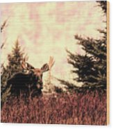 A Bull Moose Dream Wood Print