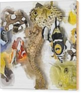A Bunch Of Colorful Fish No 05 Wood Print