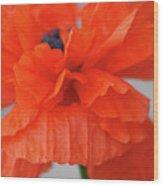 A Burns Poppy Wood Print