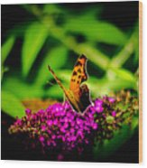 A Butterflies World  Wood Print