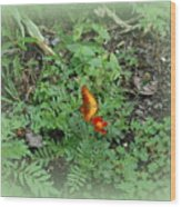 A Butterfly In The Garden Wood Print