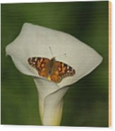 A Butterfly Lands Upon A Lily II Wood Print