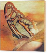 A Butterfly On A Leaf  Wood Print
