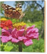 A Butterfly On The Pink Zinnia Wood Print