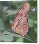 A Butterfly With Closed Wings Wood Print