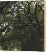 A Canopy Of Trees Wood Print