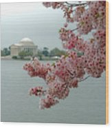 A Capital Cherry Blossom II Wood Print