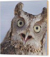 A Captive, Endangered Eastern Screech Wood Print