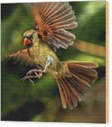 A Cardinal Approaches Wood Print