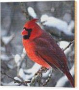 A Cardinal Day... Wood Print