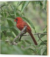 A Cardinal Day Wood Print
