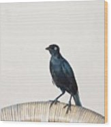 A Carib Grackle (quiscalus Lugubris) On Wood Print