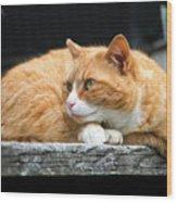 A Cat Named 'kitty' Wood Print