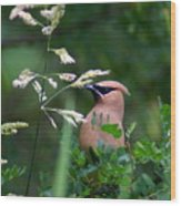 A Cedar Waxwing Facing Left Wood Print