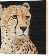 A Cheetah Named Jason Wood Print