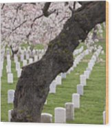 A Cherry Tree In Arlington National Cemetery Wood Print