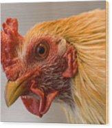 A Chicken In Burwell, Nebraska Wood Print