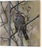 A Chipping Sparrow Wood Print