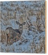 A Christmas Day Young Buck Wood Print