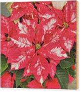 A Christmas Flower Wood Print