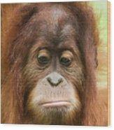 A Close Portrait Of A Sad Young Orangutan Wood Print