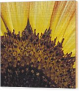 A Close-up Detail Of A Sunflower Head Wood Print